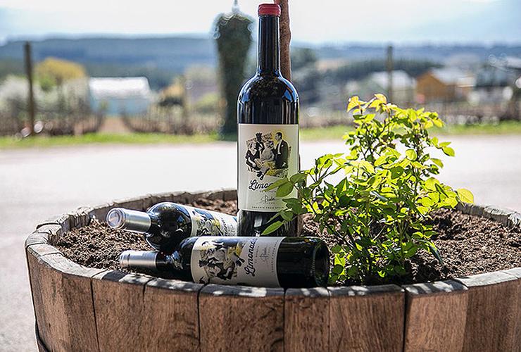 Vinyo Wines